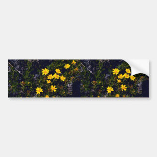 Snakeweed Bumper Stickers