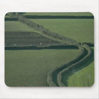 Snaking green lane mousepads