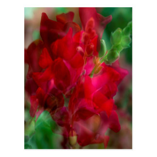 Snap Dragon Postcard