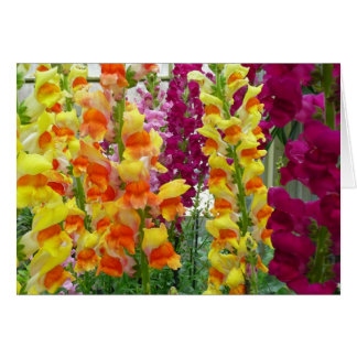 Snapdragons Colorful Floral Greeting Card