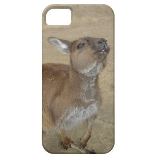 Snarky Wallaby iPhone 5 Covers