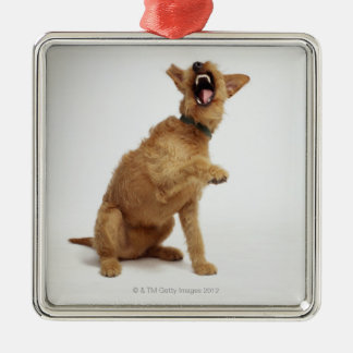 Snarling Dog Christmas Tree Ornaments
