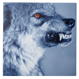Snarling wolf (Canis Lupus), profile (Digital Tile