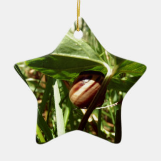 sneaky snail christmas ornament