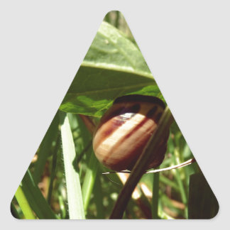 sneaky snail triangle sticker