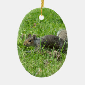 Sneaky Squirrel Ceramic Oval Decoration