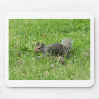 Sneaky Squirrel Mouse Mat