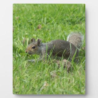 Sneaky Squirrel Plaque