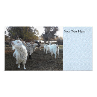 Sneezy Goat Photo Card Template