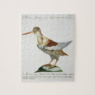 Snipe, c.1767-76 (hand coloured engraving) jigsaw puzzle