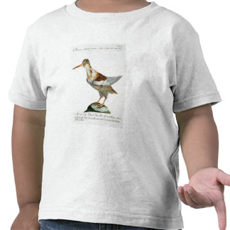 Snipe c 1767-76 hand coloured engraving tee shirts