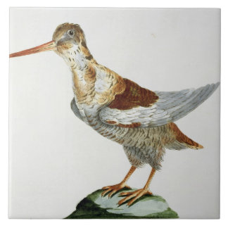 Snipe, c.1767-76 (hand coloured engraving) tile