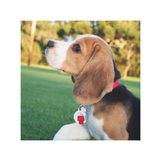 Snoopy Beagle Canvas Gallery Wrapped Canvas