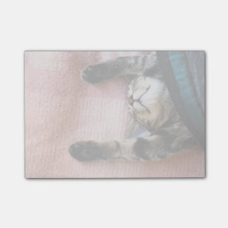 Snoozing Kitten Post-it Notes