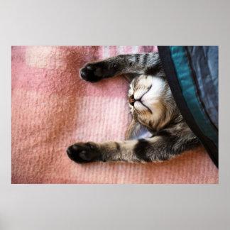 Snoozing Kitten Poster