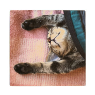 Snoozing Kitten Wood Coaster