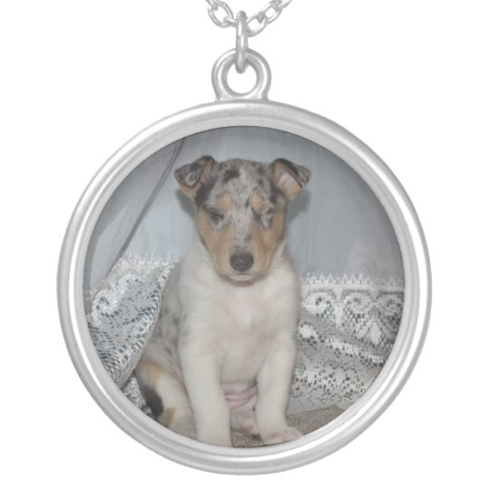 Snoozing Smooth Blue Collie Silver Plated Necklace