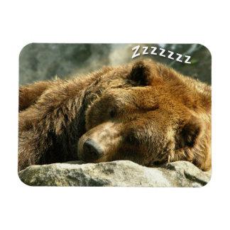 Snoring Bear Magnet
