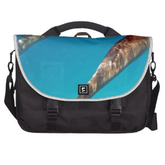 snorkeling with dolphin computer bag