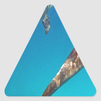 snorkeling with dolphin triangle stickers