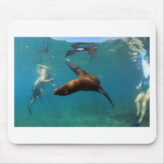 Snorkeling with playful sea lion Galapagos Islands Mousepads
