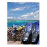 snorkelling tools postcard