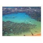 Snorklers at Hanauma Bay, Oahu, Hawaii Postcard