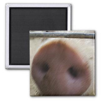 Snout Fridge Magnet