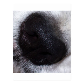 Snout Postcards