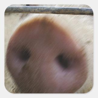 Snout Square Sticker