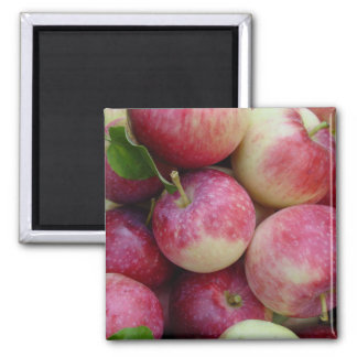 Snow Apples Square Magnet