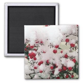 Snow Berries Square Magnet
