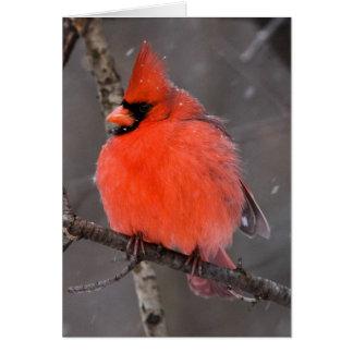 Snow Bird Card