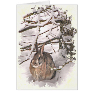 Snow Bunny Fathers Day Greeting Card