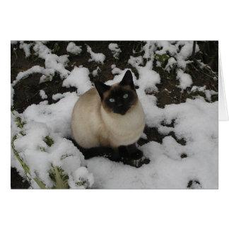 Snow Cat Greeting Cards