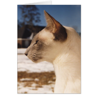 Snow Cat - Siamese Blue Point Profile Card