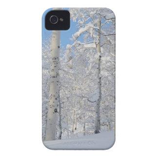 Snow-Covered Aspens, Beartrap-Desolation Ridge iPhone 4 Covers