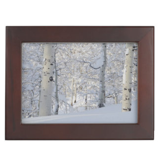 Snow-Covered Aspens, Beartrap-Desolation Ridge Keepsake Box