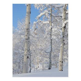 Snow-Covered Aspens, Beartrap-Desolation Ridge Postcard