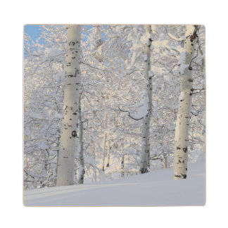 Snow-Covered Aspens, Beartrap-Desolation Ridge Wood Coaster