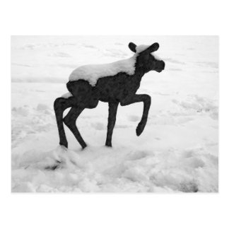 Snow Covered Baby Moose Postcard