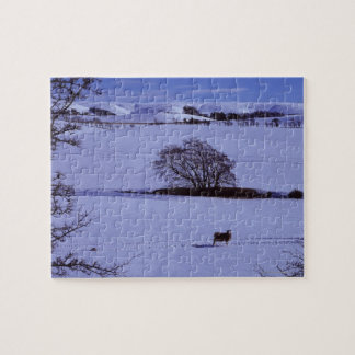 Snow covered fields containing sheep with the jigsaw puzzle