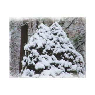 Snow Covered Firs with digital oil painting effect Canvas Prints