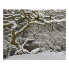 Snow-covered Japanese maple 2 Poster