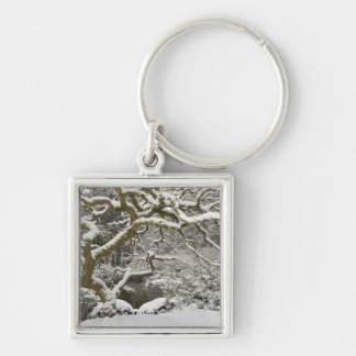Snow-covered Japanese maple 2 Silver-Colored Square Key Ring
