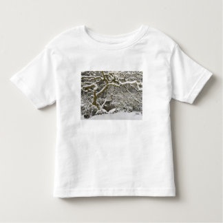 Snow-covered Japanese maple 2 Toddler T-Shirt