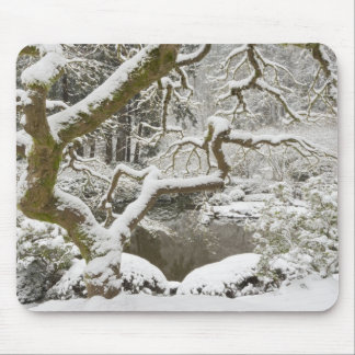 Snow-covered Japanese maple Mouse Pad