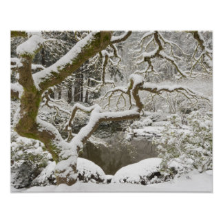 Snow-covered Japanese maple Poster