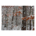 Snow Covered Oak Trees Print