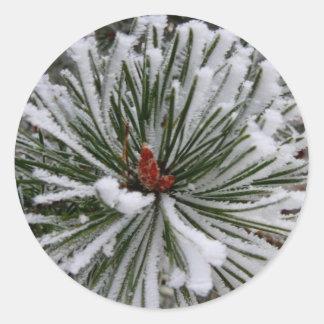 Snow-Covered Pine Needles Classic Round Sticker